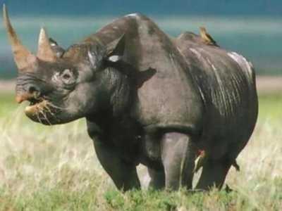世界已經滅絕的動物 7種已經滅絕的中國動物