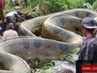 世界最巨大的蛇 古墓挖出千年巨蛇長20米重達400斤